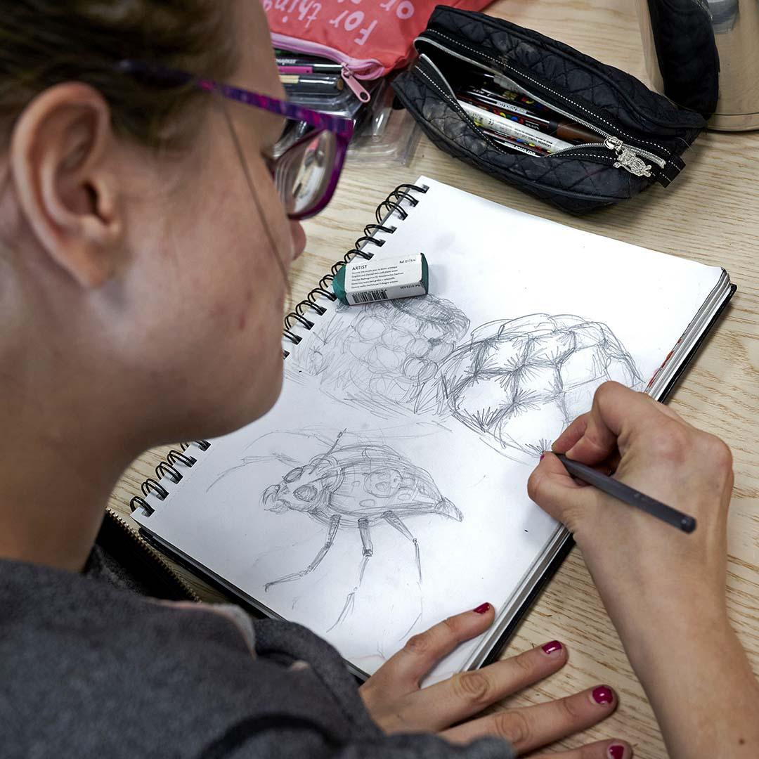 Kurkistamme naisen olkapään yli luonnosvihkoon, johon hän piirtää palloista koostuvaa, kekomaista muodostelmaa. Vieressä on valmis piirustus pitkäjalkaisesta kovakuoriaisesta.