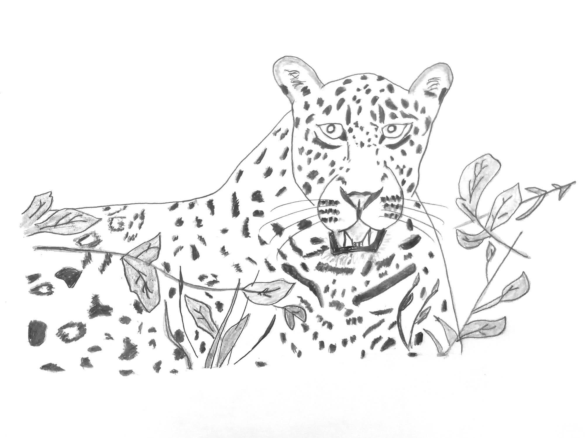 Lyijykynäpiirros pensaan takaa uhkaavasti tuijottavasta leopardia muistuttavasta kissapedosta.
